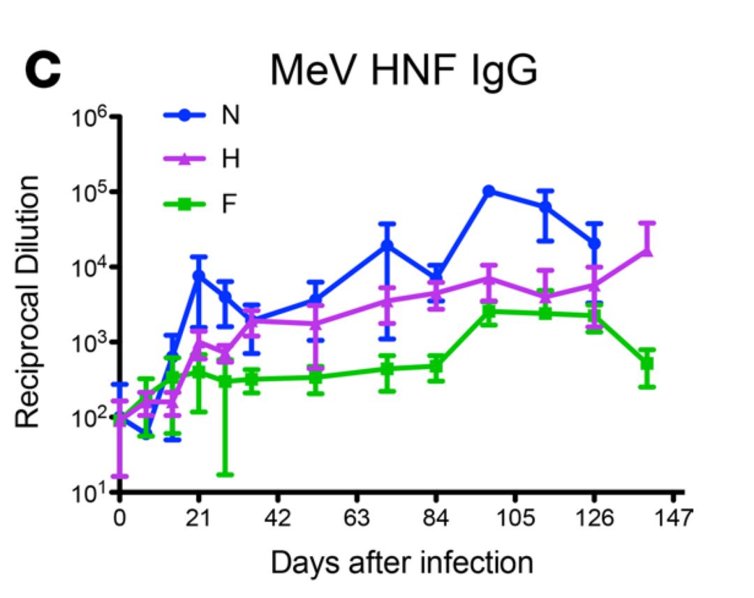 后新冠疫情时期,谨防史上传染性最强麻疹病毒
