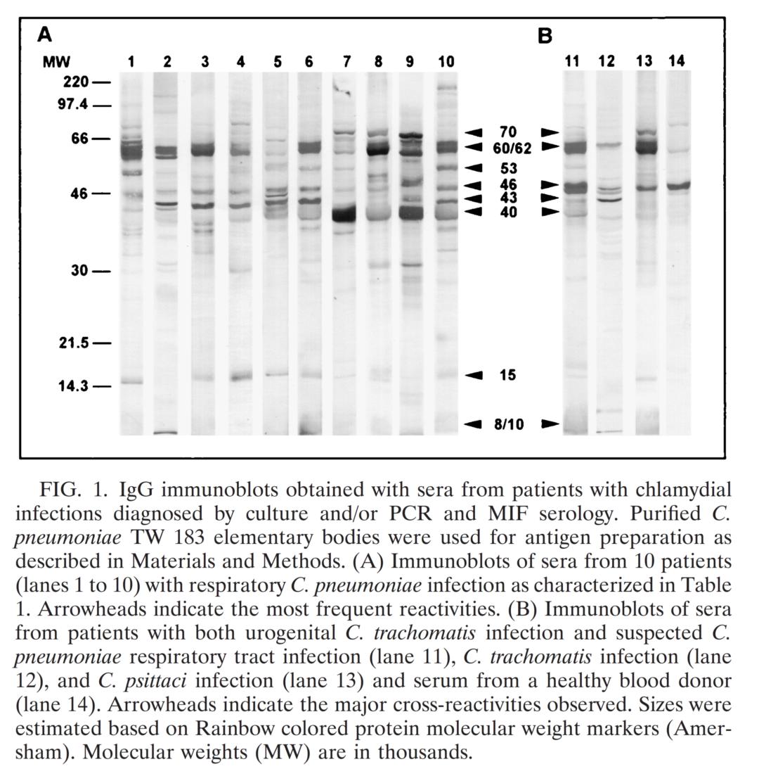 可为和有为,呼吸道症候群病原体检测系列抗原详解Ⅱ ----肺炎衣原体