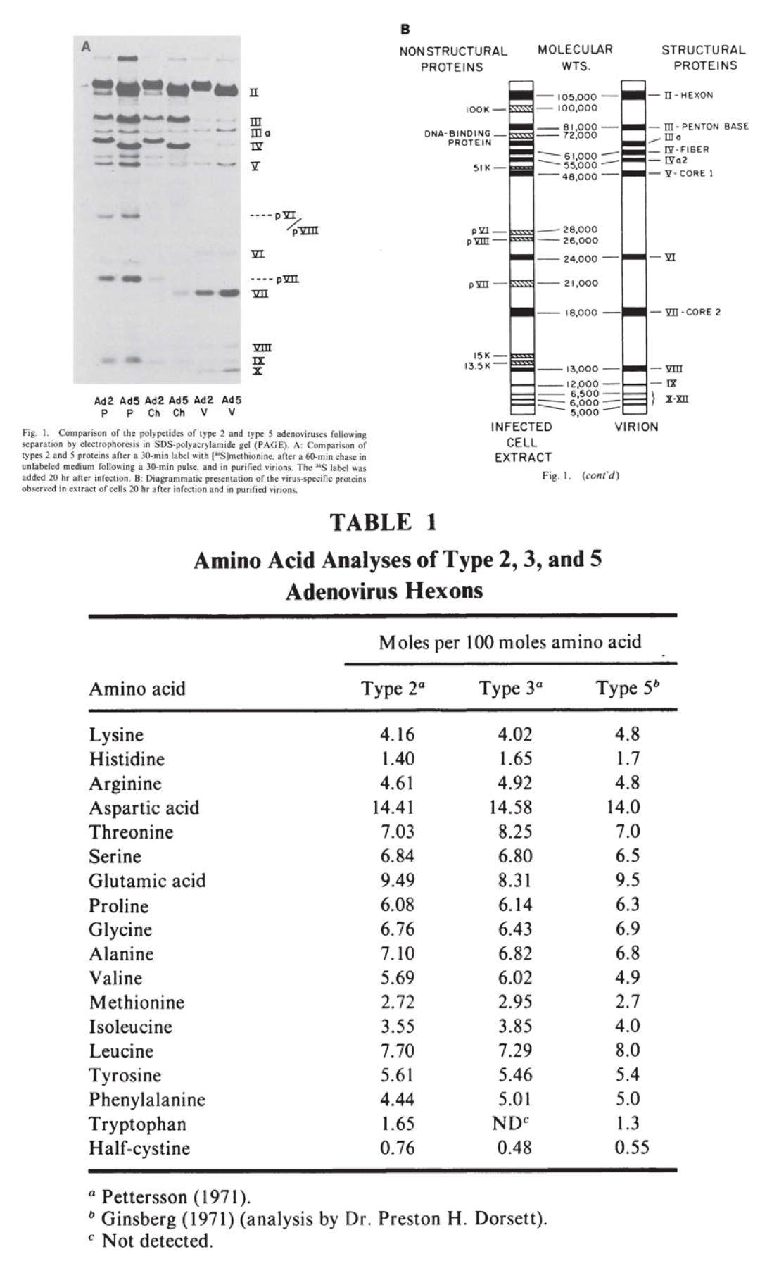 """检测腺病毒的""""万能钥匙""""---Serion腺病毒六邻体蛋白"""