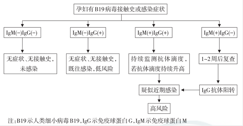 TORCH检测试剂研发抗原选择策略综述