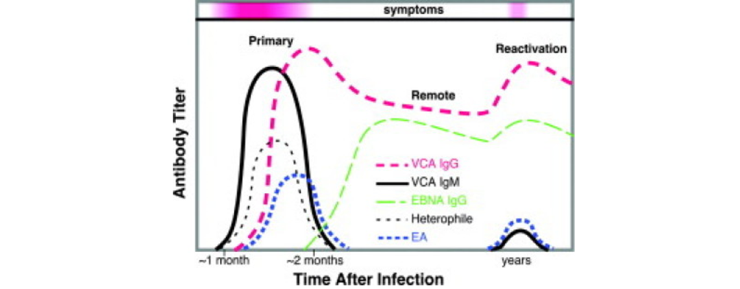 EB病毒诊断之抗体谱,抗原选择有讲究