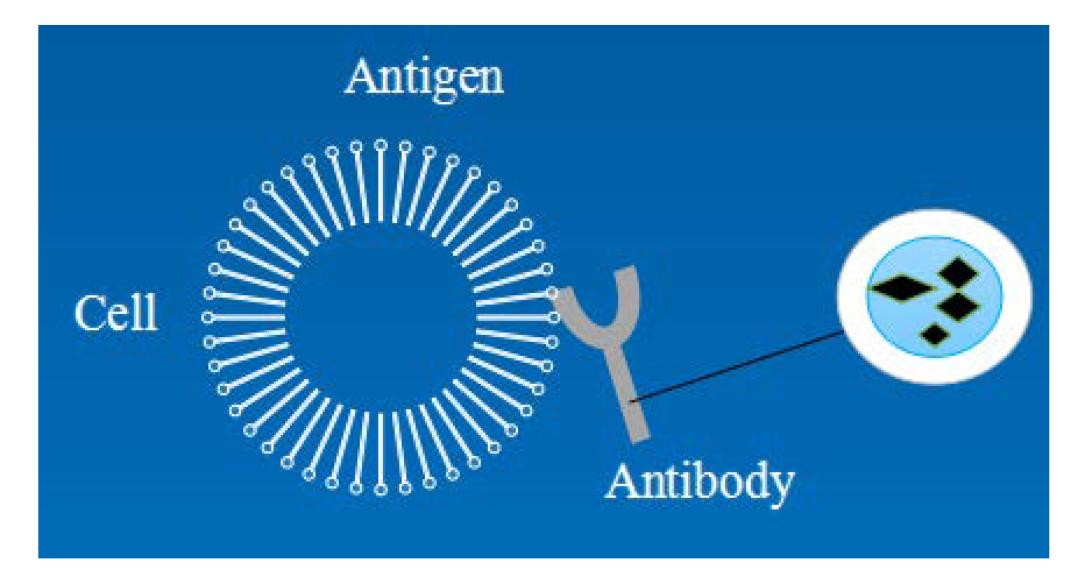 生物磁珠体外应用简述